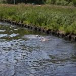 Gegenverkehr im Hadelner Kanal
